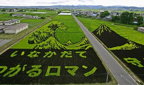 Rice_paddy3