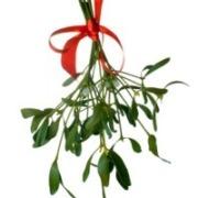 Mistletoe_3